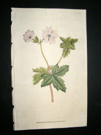Curtis 1787 Hand Col Botanical Print. Striped Geranium #55,